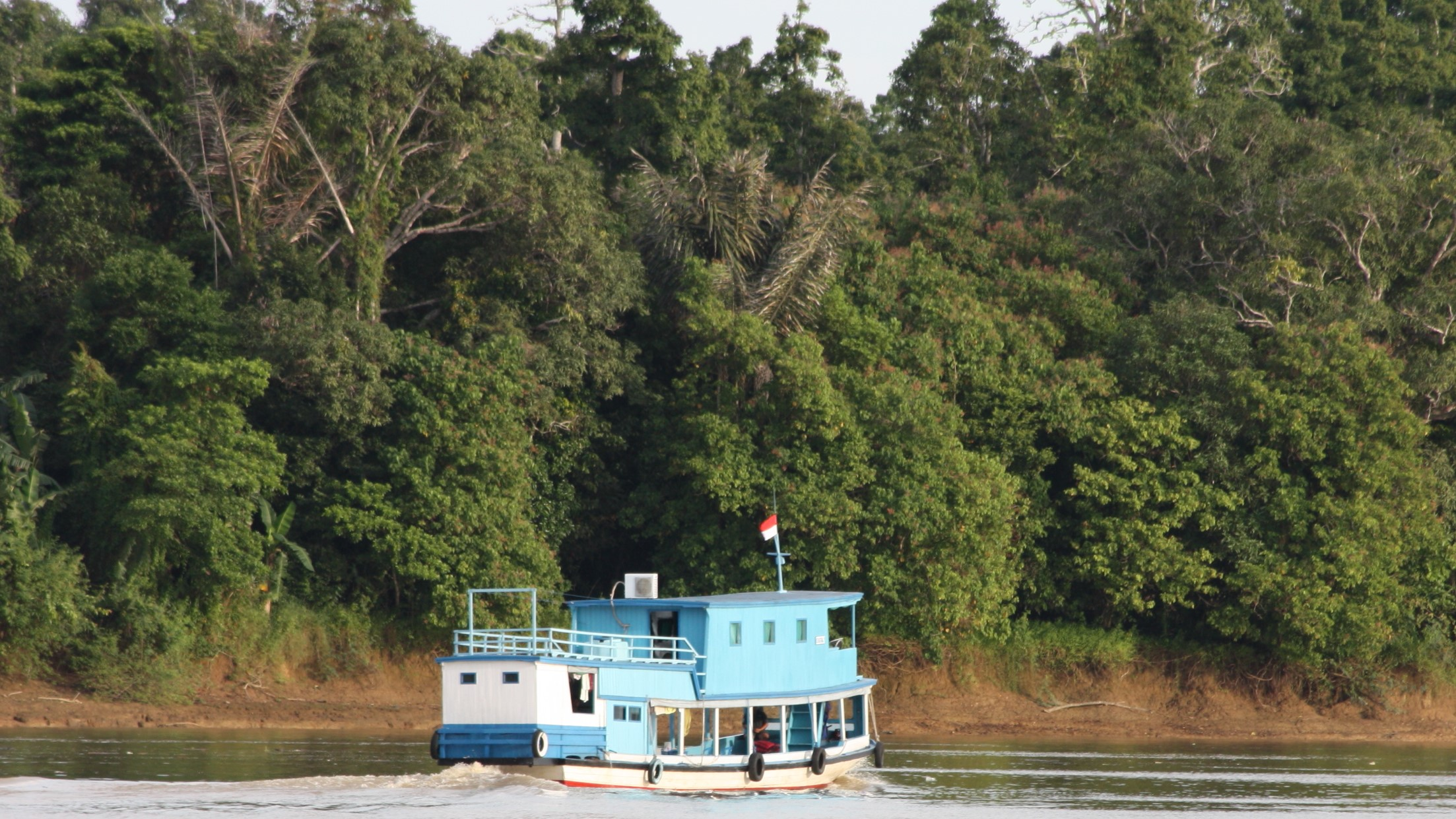 mahakam river, cruise, tour trek, guide, kalimantan, borneo, indonesia, dayak, culture, jungle, wildlife, safari, rain forest, forest, longhouse, journey, expedition